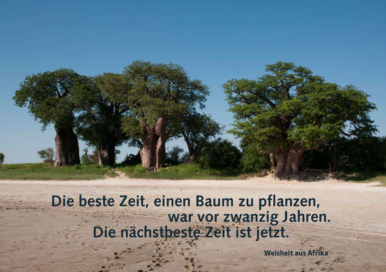 amarena_baobab